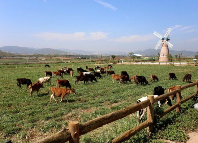 Nông trại Đà Lạt Milk Farm