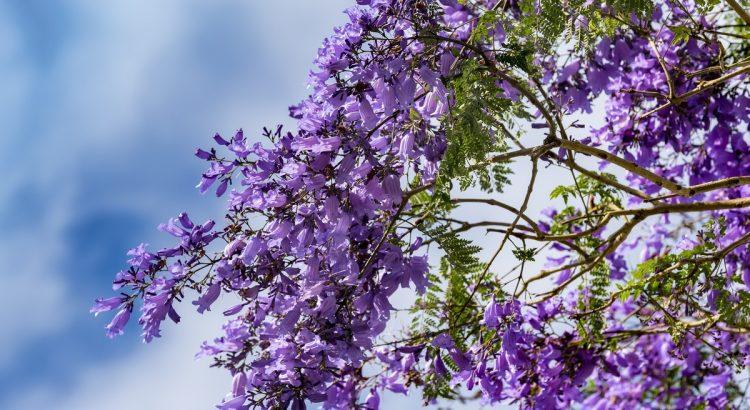 Mùa hoa Đà lạt tháng 5